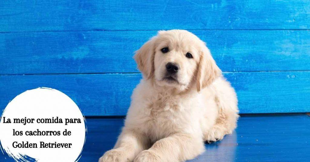 La mejor comida para los cachorros de Golden Retriever